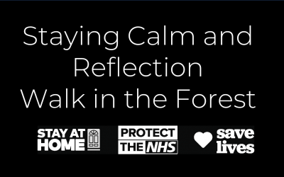 Staying Calm and Reflection: Walk in the Forest